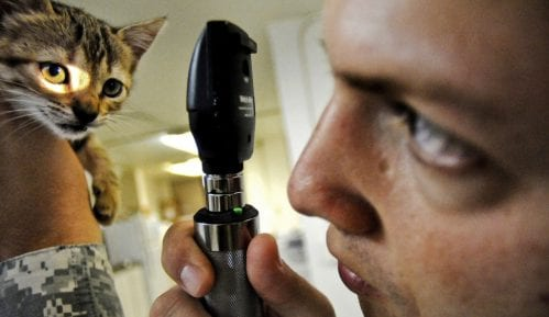 Koliko je godišnji sistematski pregled važan za mačku? 14