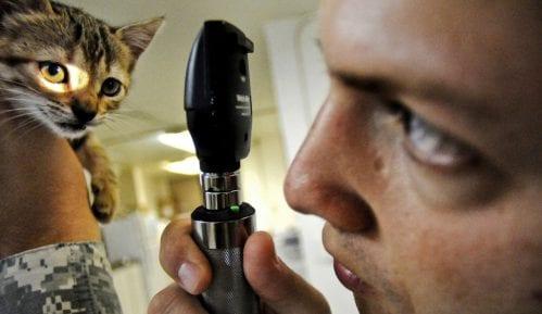 Koliko je godišnji sistematski pregled važan za mačku? 7
