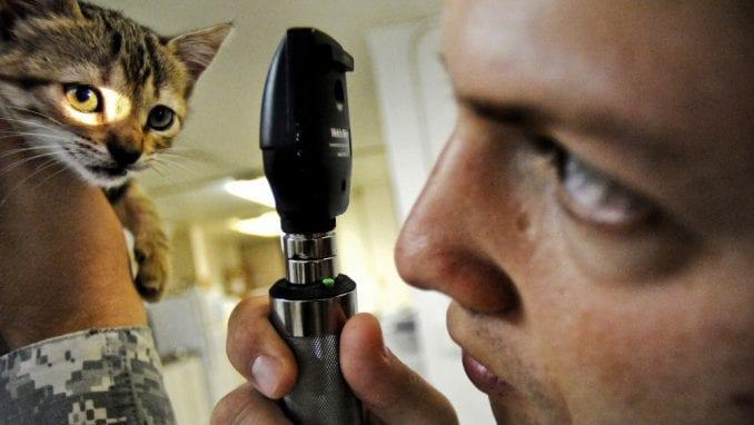 Koliko je godišnji sistematski pregled važan za mačku? 1