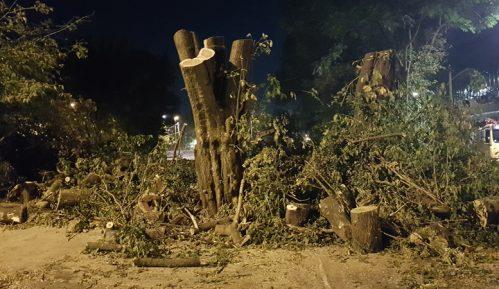 Posečena stabla u Bjelanovićevoj ulici 2