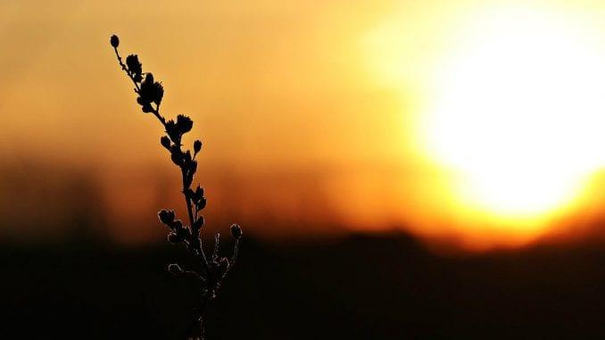 Godina 2019. jedna od tri najtoplije od polovine 19. veka 3