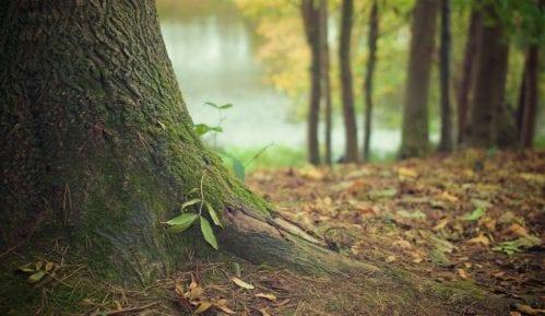 Pronađen najstariji fosil drveta 14