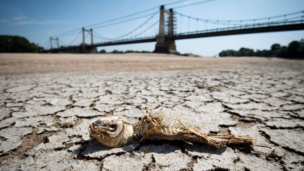 Skelet ribe leži na suvom dnu reke Luar u zapadnoj Francuskoj