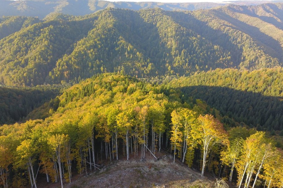 Šuma na Istočnim Karpatima