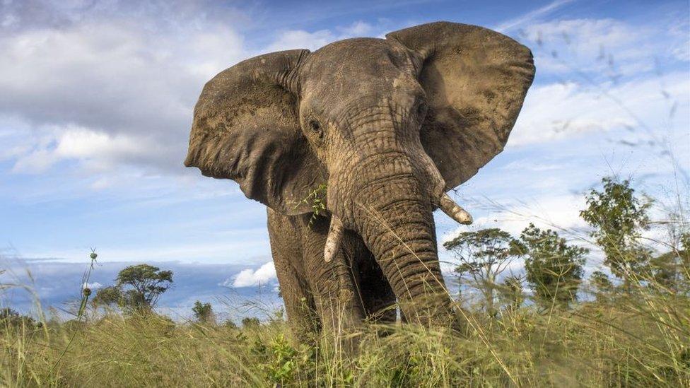Slon u parku Huange