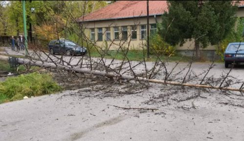 Zaječar: Srušilo se drvo u zdravstvenom centru 12