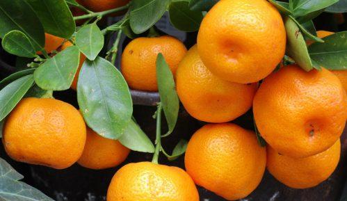 Republika Srpska zabranila uvoz 21 tone turskih mandarina 11
