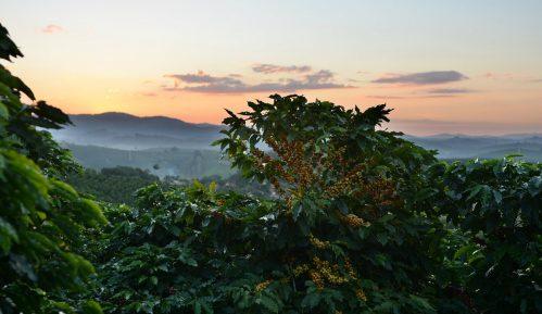 Kada se i žene uključe, stvari na plantažama kafe idu na bolje 15