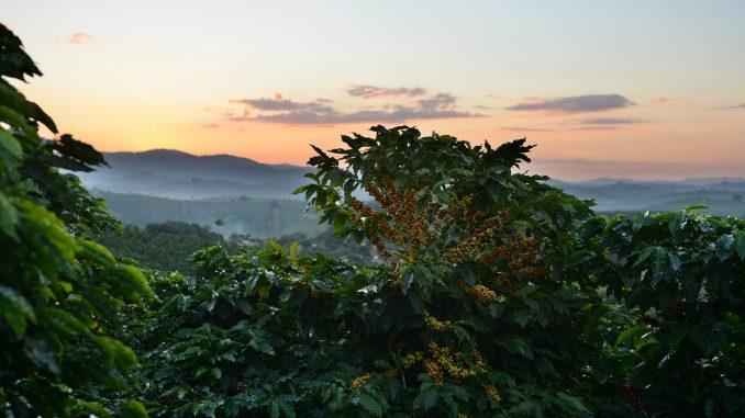Kada se i žene uključe, stvari na plantažama kafe idu na bolje 5