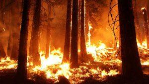 Kako urednici Gardijana temama skreću pažnju na klimatske promene? 2