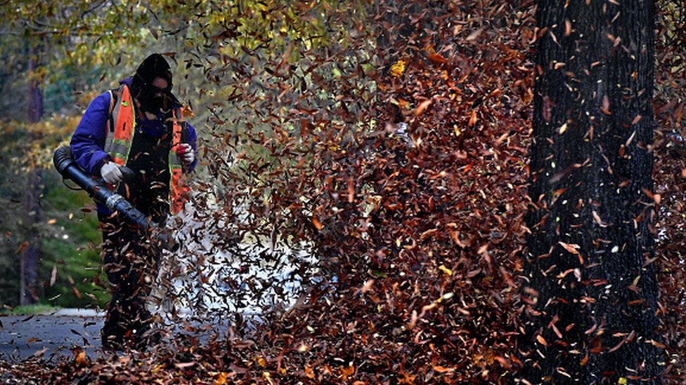 A worker clearing leaves with a leaf blower