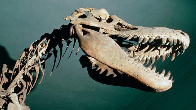 Dinosaurusi i pustinja Gobi: Zemlja drevnih stvorenja 1