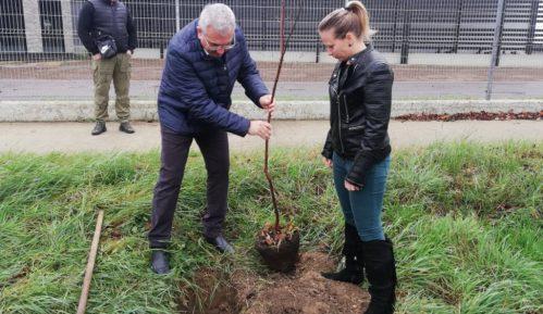 Titel sadi 16.000 stabala, po jedno drvo za svakog stanovnika 37