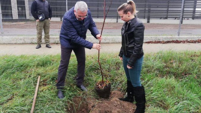 Titel sadi 16.000 stabala, po jedno drvo za svakog stanovnika 1