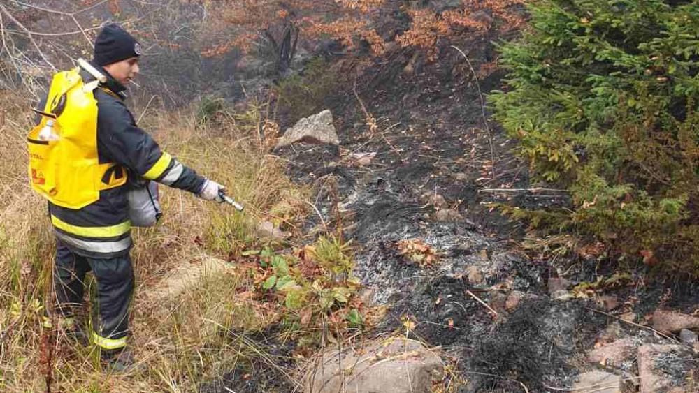 Da li zbog klimatskih promena ima više šumskih požara? 3