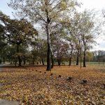 Kako izgleda Ada Ciganlija u jesenjem periodu? (FOTO) 10