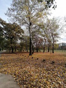 Kako izgleda Ada Ciganlija u jesenjem periodu? (FOTO) 2