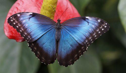 """""""Teslagram"""" prirodni hologram od krila leptira u borbi protiv fasifikovanja novca 10"""
