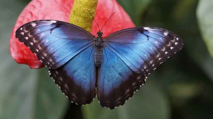 """""""Teslagram"""" prirodni hologram od krila leptira u borbi protiv fasifikovanja novca 2"""