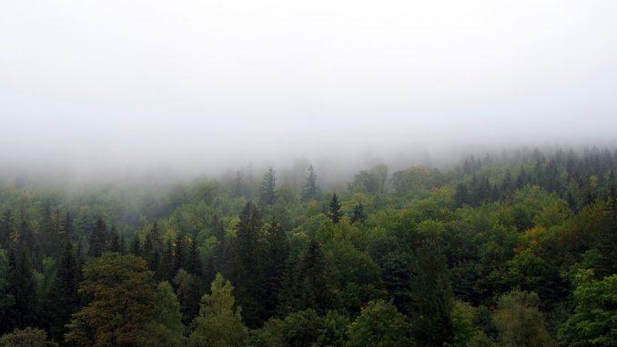 Jutarnja magla otežava saobraćaj 3