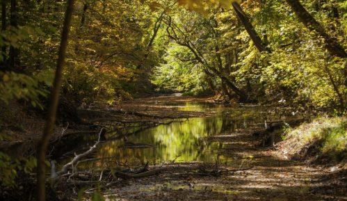 Svetski dan šuma obeležava se  21. marta 1