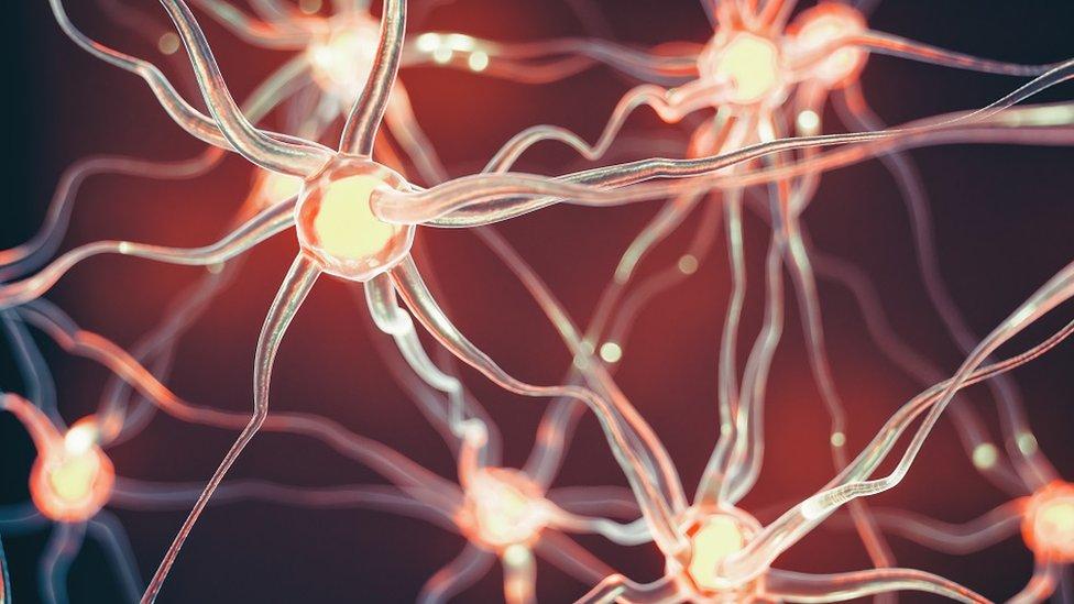 Neuroni i neuralne putanje