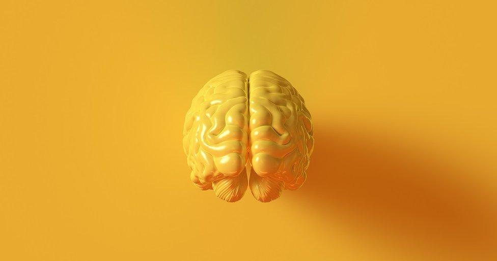 Anatomski model mozga