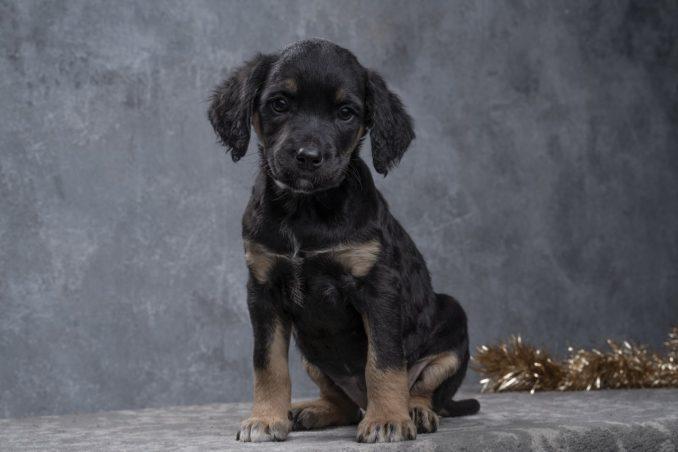 Udomljavanje pasa: Predivne fotografije beogradskih pasa koji traže dom 3