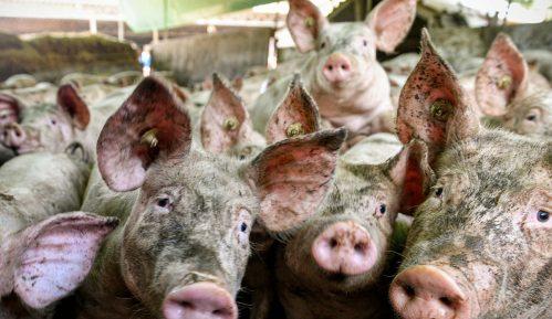 Uvoz proizvoda od mesa skočio 200 odsto 8