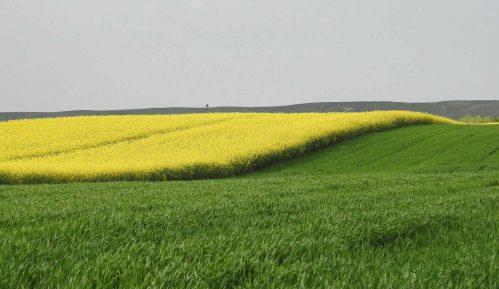 Agrosmart: Matijević najveći zemljoposednik, Kostića i Miškovića pretekli Almeks i Al Dahra 1