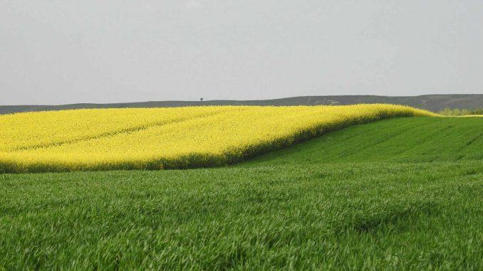 Isplata podsticaja ministarstva za biljnu proizvodnju i bez podnošenja zahteva 2