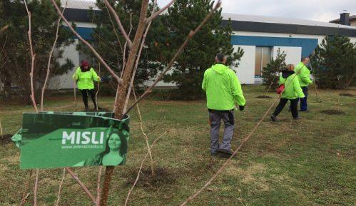 Zelena stranka u Zrenjaninu počela akciju sadnje 5.000 stabala novog drveća 1