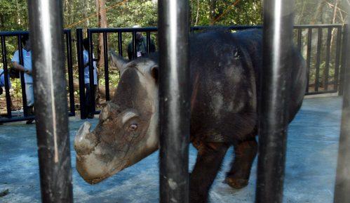 Uginuo poslednji sumatranski nosorog Malezije 54