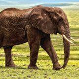 WWF: Pad više od dve trećine populacije divljih životinja za manje od 50 godina 1
