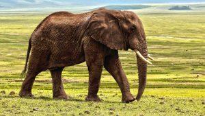 Tri sisara koja bi mogla da nestanu zbog klimatskih promena 2