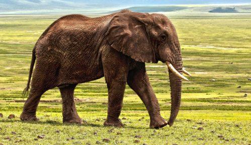 U Zimbabveu pronađeno još 12 uginulih slonova, sumnja se na bakteriju 7