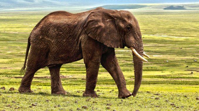 Bakterijska infekcija moguć uzrok smrti 11 slonova u Zimbabveu 1