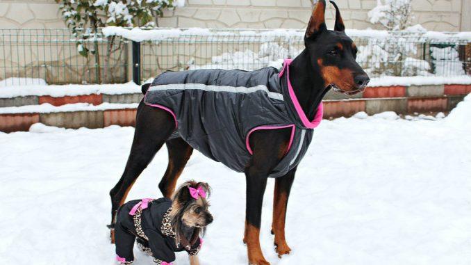 Da li je oblačenje pasa postalo potreba ili moda? 2