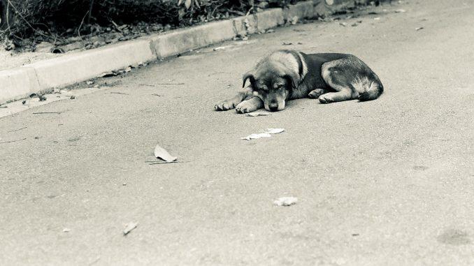 Zašto je teško prikupiti podatke o broju otrovanih životinja u Srbiji? 4