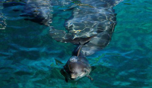 Delfini - vodeni sisari koji u ljudima vide prijatelje 14