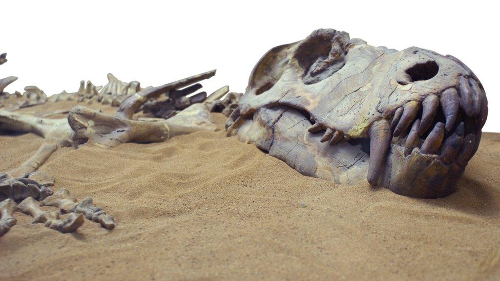 Fossilised dinosaur bones in sand