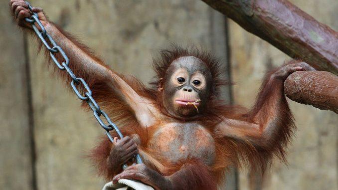 Nemačka, tragedija i životinje: Požar u nemačkom zoološkom vrtu - stradali majmuni 1