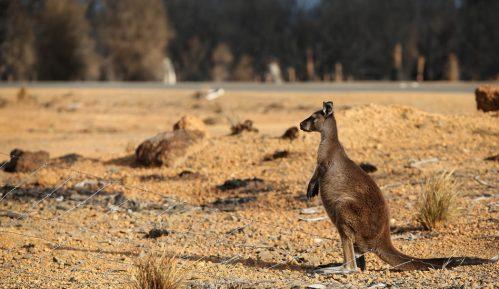 """Požari u Australiji: """"Apokalipsa"""" stigla na Ostrvo kengura 1"""