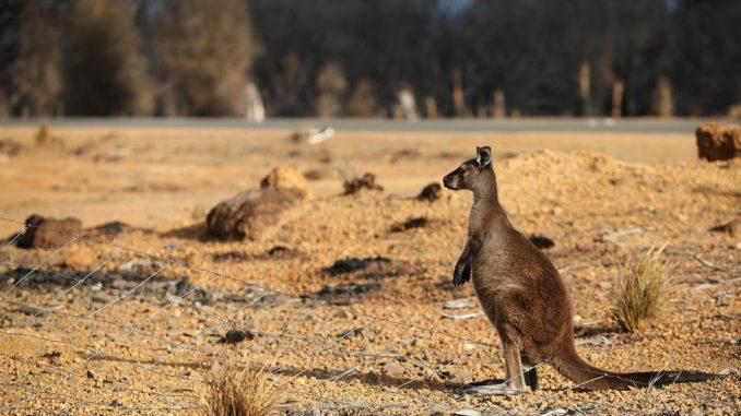 """Požari u Australiji: """"Apokalipsa"""" stigla na Ostrvo kengura 3"""