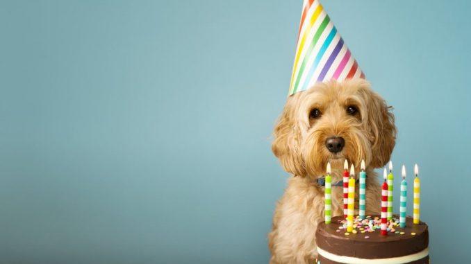 Pas i godine: Kako da izračunate koliko je stvarno star vaš ljubimac 2