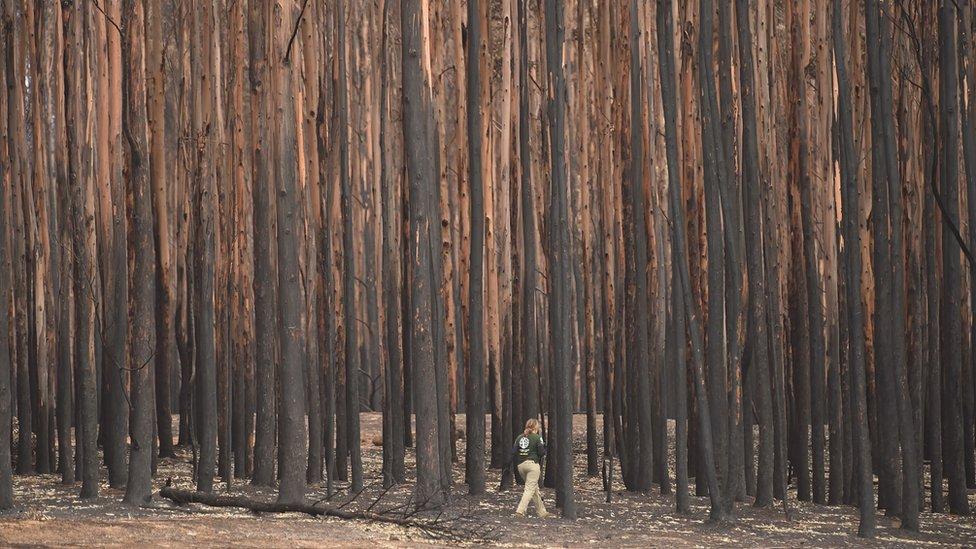 Spasioci pretražuju vatrom opustošeno Ostrvo kengura u potrazi za preživelim životinjama