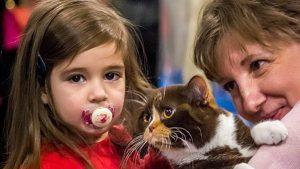 Festival posvećen mačkama u Beogradu 11. i 12. januara 2