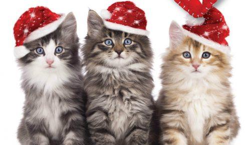 Festival posvećen mačkama u Beogradu 11. i 12. januara 13