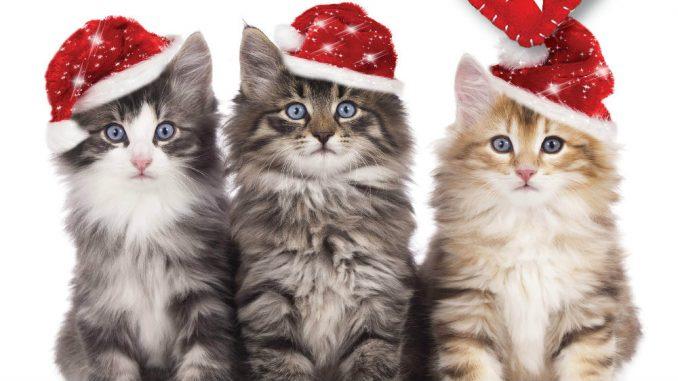 Festival posvećen mačkama u Beogradu 11. i 12. januara 6