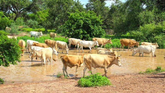 Gambija - mala zemlja posvećena borbi protiv klimatskih promena 1
